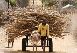 Wood being carted in Senegal